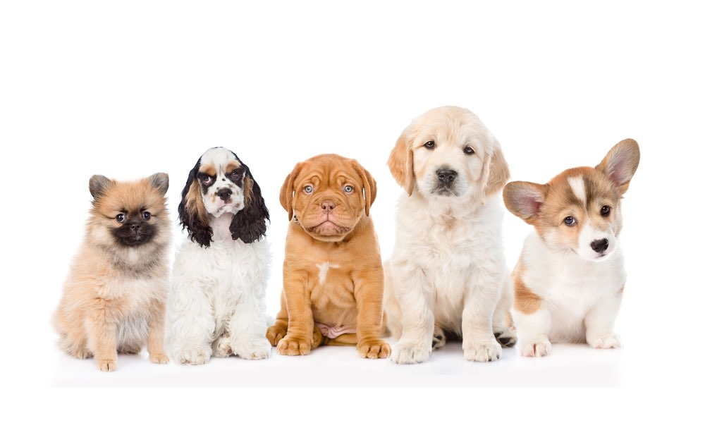 Pups N Pooches Dog Training